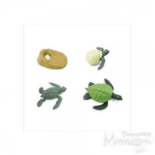Cykl życia żółwia