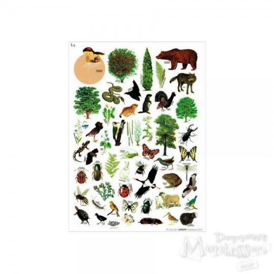 Naklejki zwierzęta i rośliny - zestaw 3 arkuszy