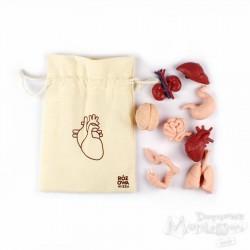 Figurki narządów wewnętrznych człowieka w woreczku