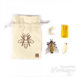 Figurki cykl życia pszczoły w woreczku
