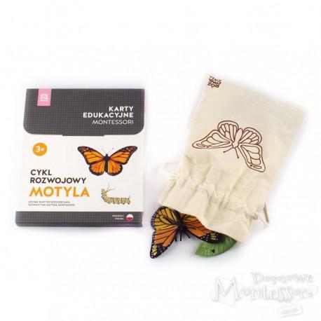 Cykl rozwojowy motyla (komplet karty i figurki)