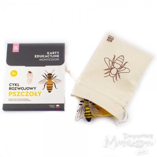 Cykl rozwojowy pszczoły (komplet karty i figurki)