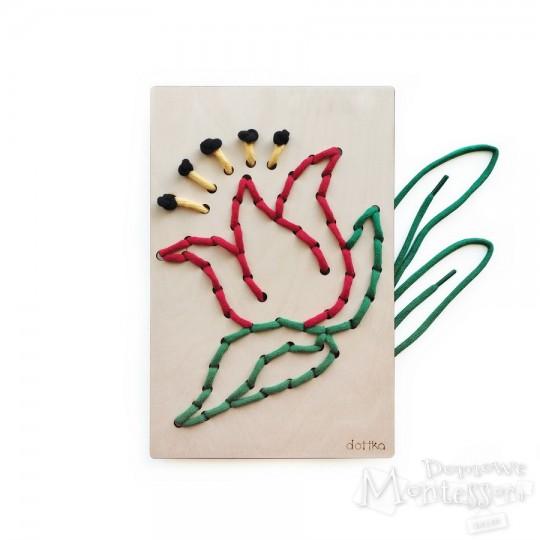 Dottka - tulipan